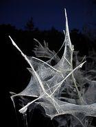 `Der mit den Raupen tanzt trifft auf Waldgeister