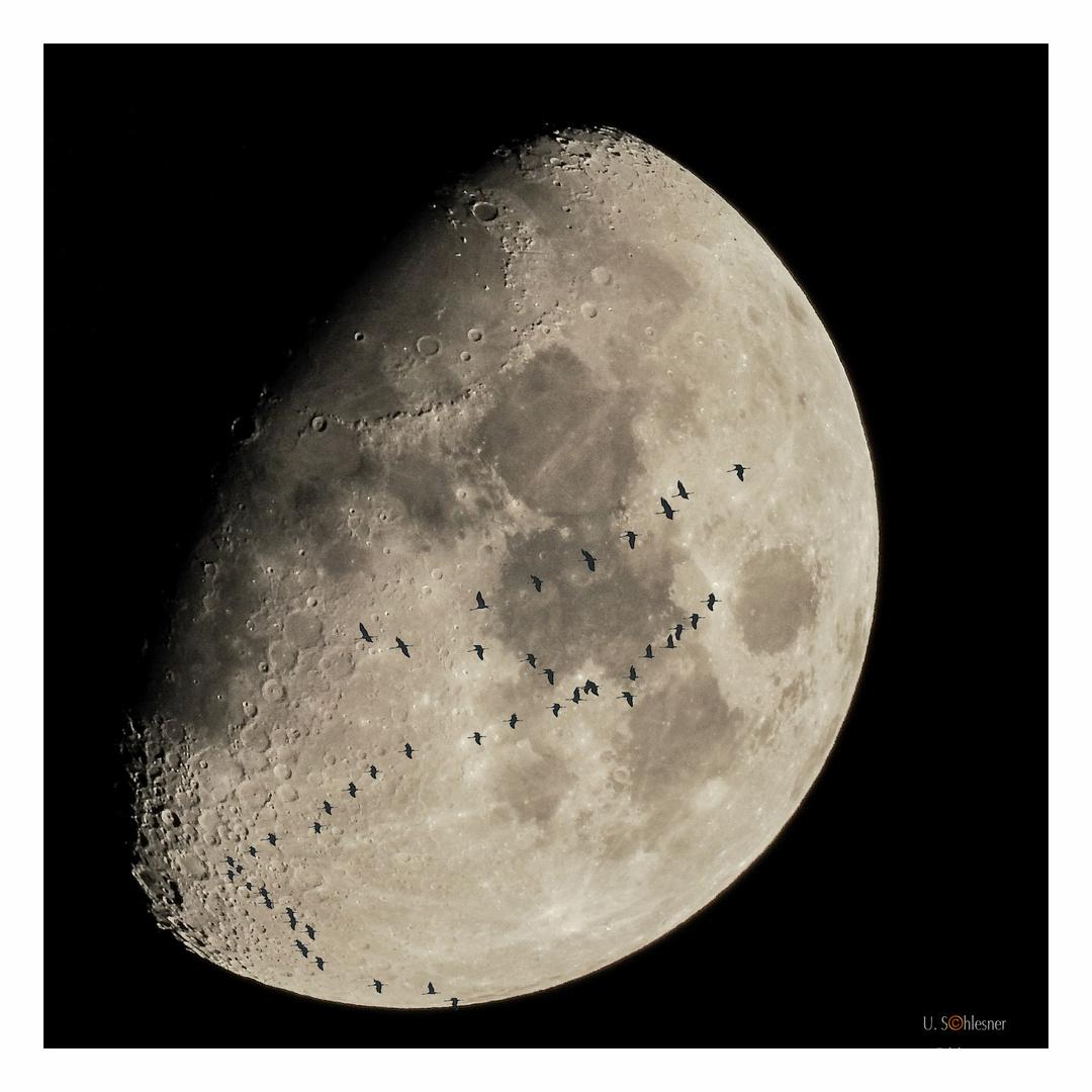 der Mond (4)