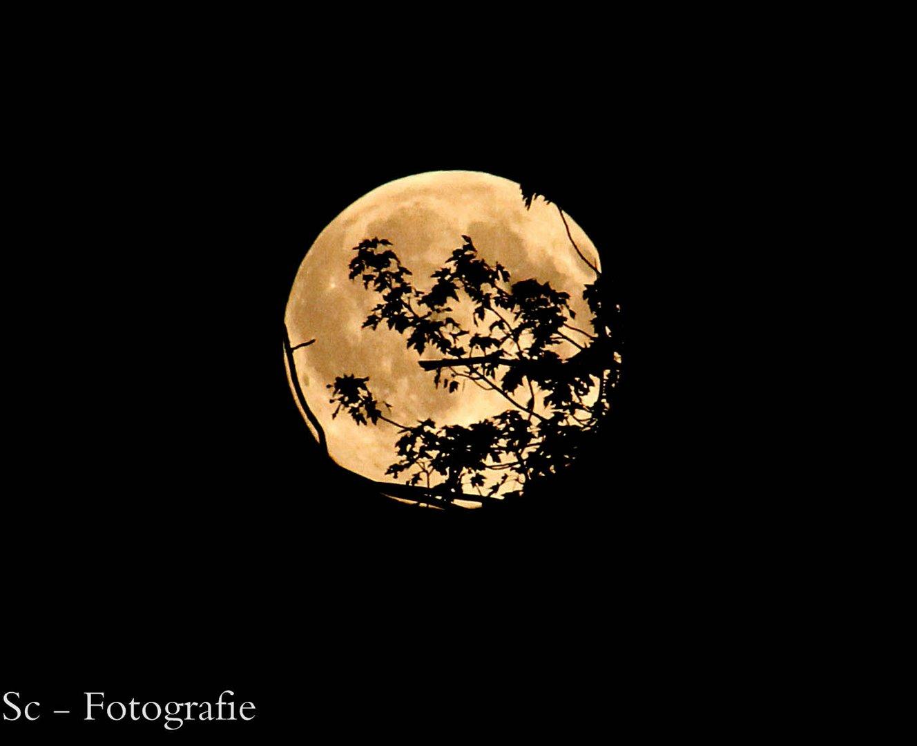 Der Mond am 13.06.2014