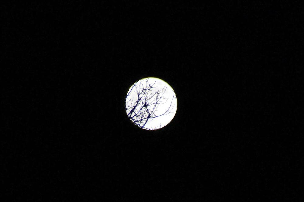 Der Mond durch die Baumwipfel