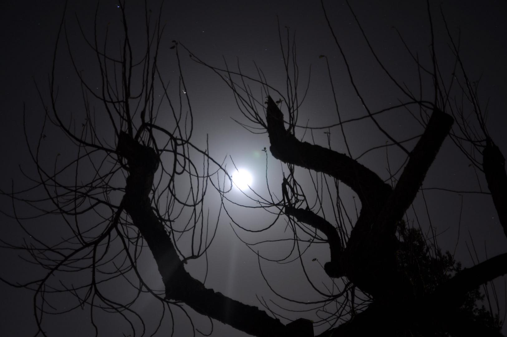 Der Mond im Apfelbaum