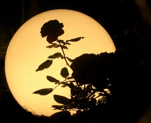Der Mond ist in den Garten gefallen!