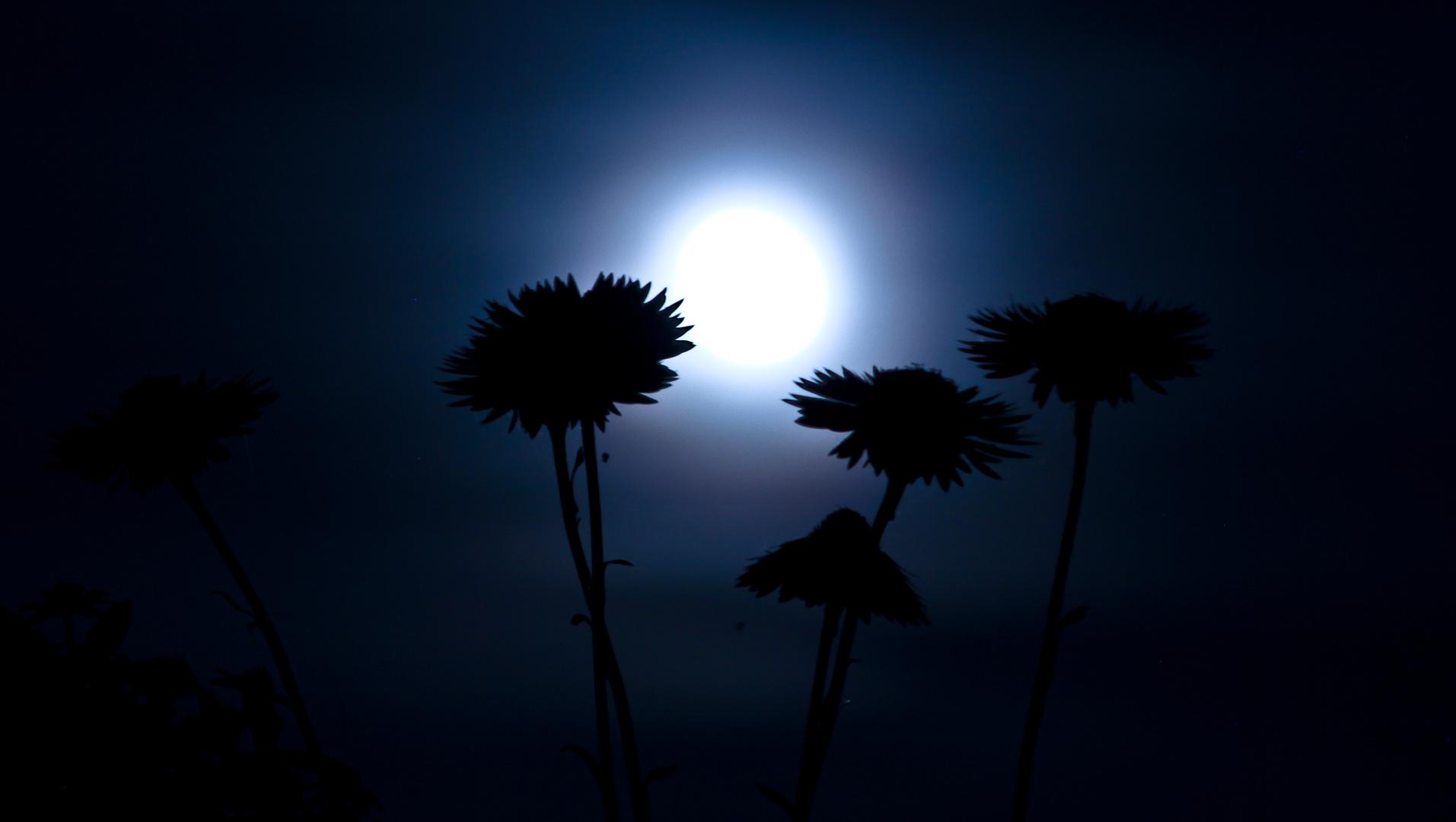 Der Mond von gestern Nacht...