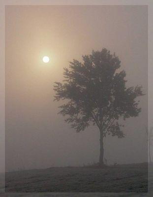 Der Morgen erwacht ! (2)