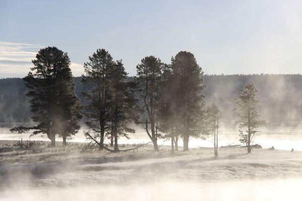 Der Morgen erwacht - im Yellowstone Nationalpark