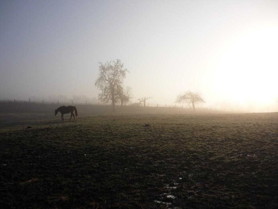 Der Morgen-Nebel