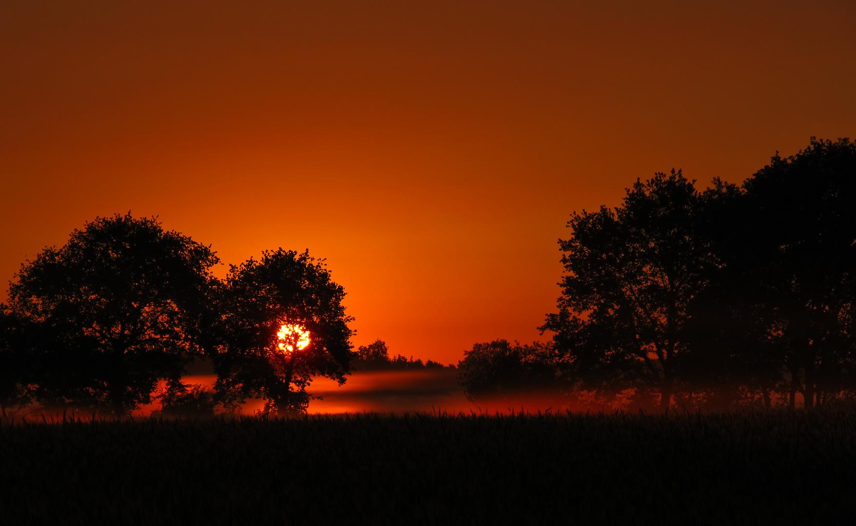 Der Morgennebel und die Sonne