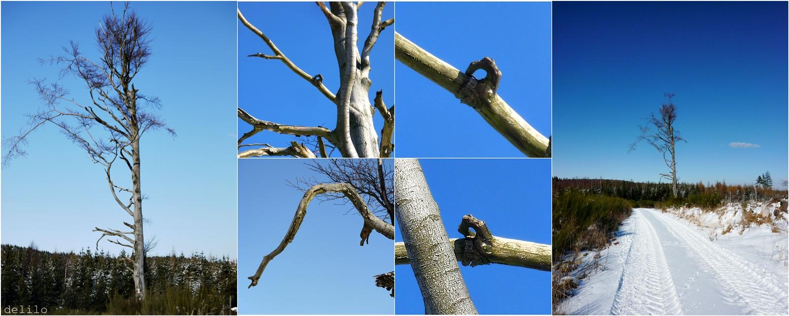 der morsche Baum