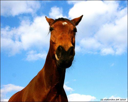 Der Muli im Pferdepelz II ;o)
