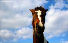 Der Muli im Pferdepelz ;o)