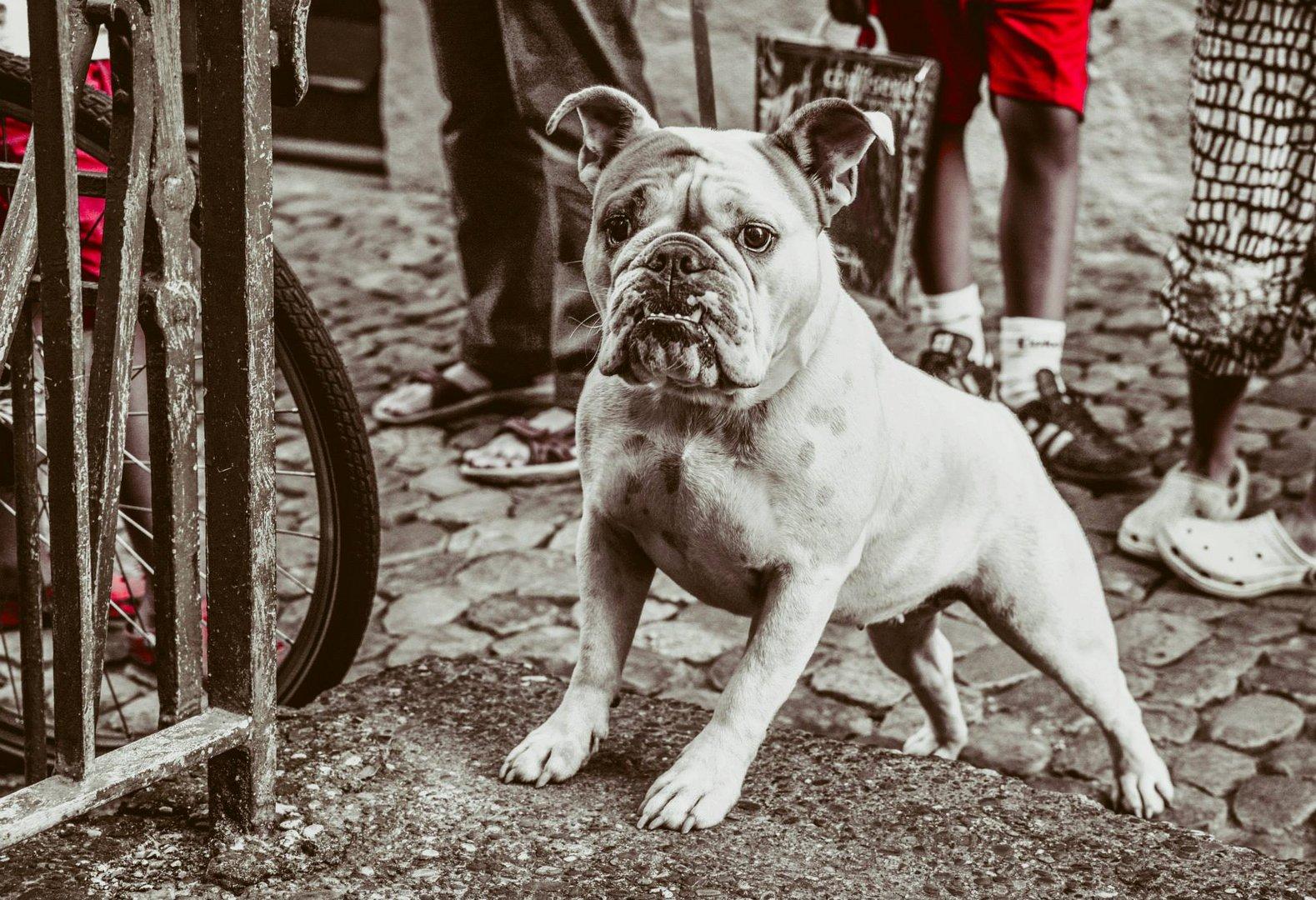 Der mutige Hund