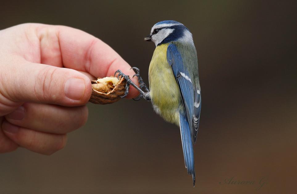Der mutige Vogel...