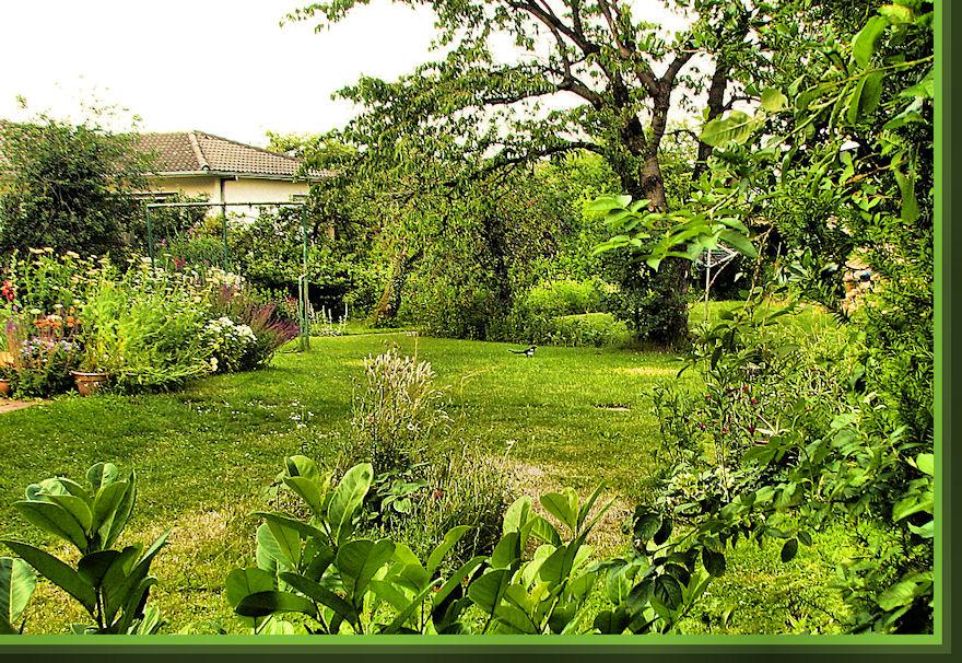Der Nachbargarten im Sommer