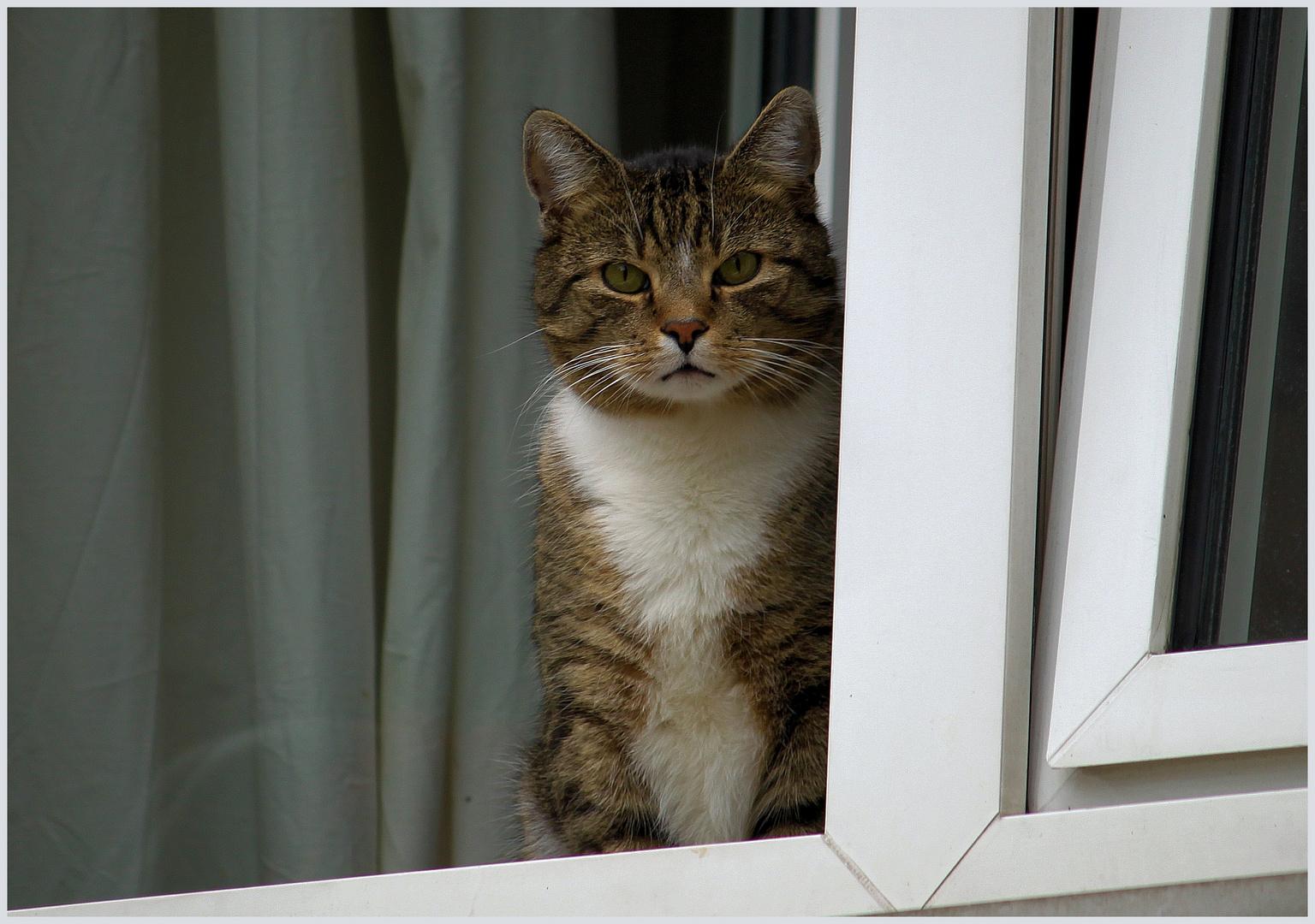 Der Nachbarskater Nicki ...