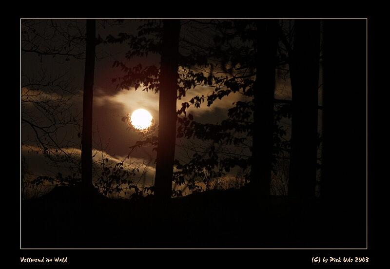 Der Narr und die Mondin (Bild und Text)