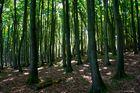 Der Nationalpark Jasmund (1)