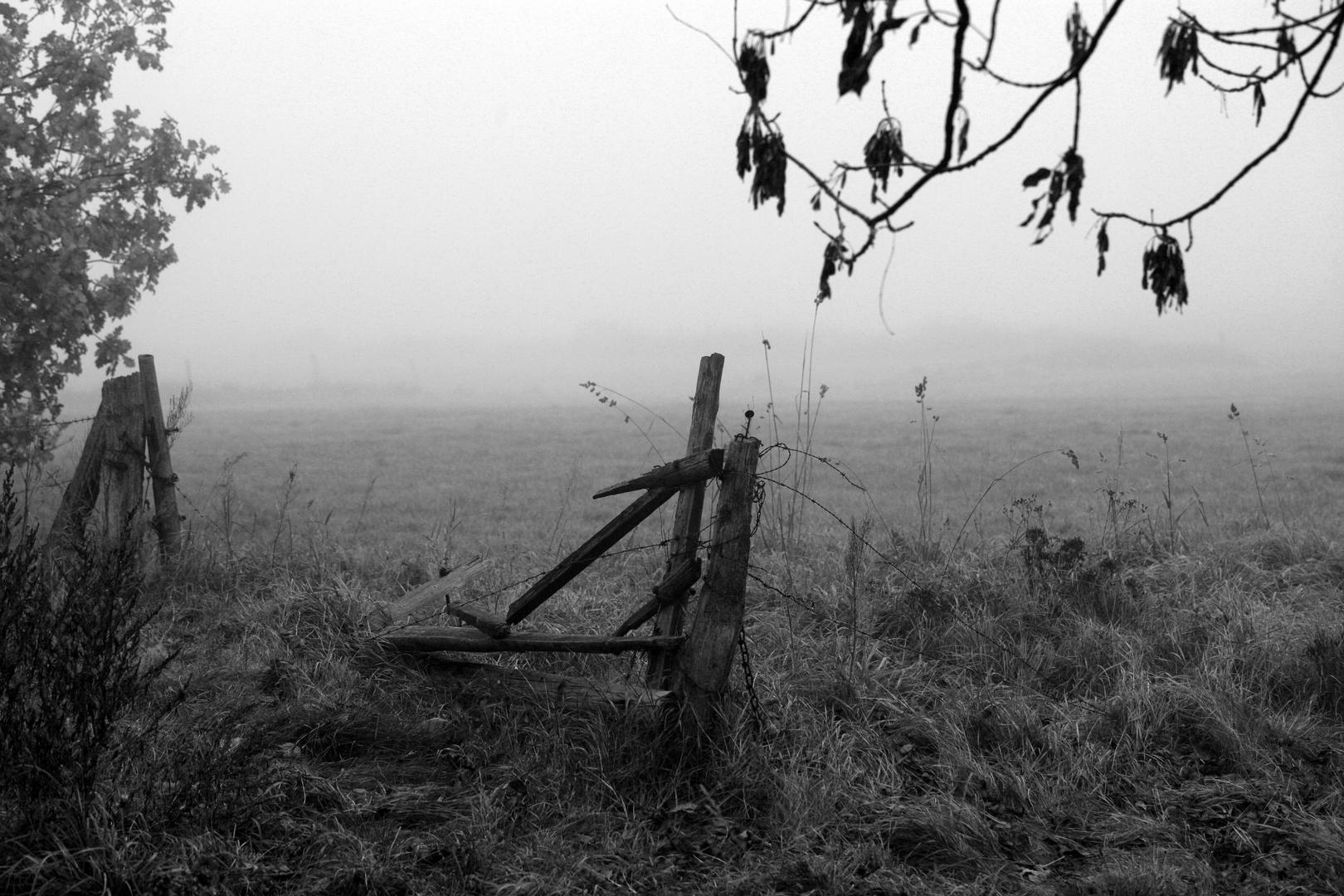 Der Nebel...
