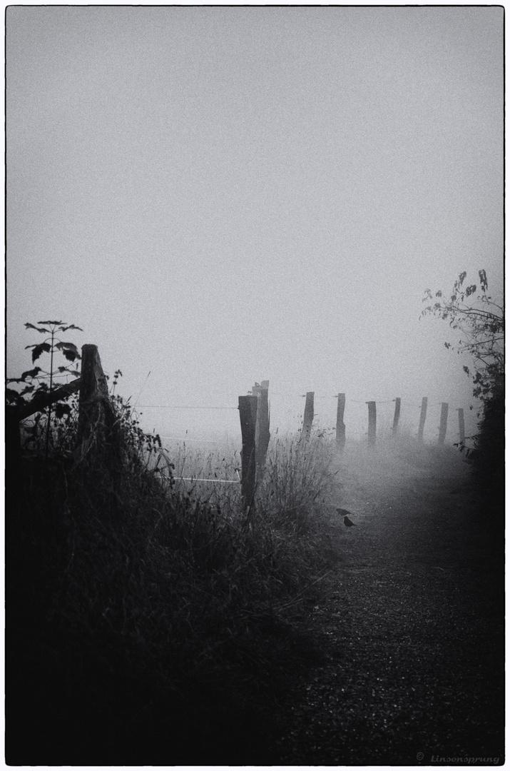 Der Nebel im Herbst