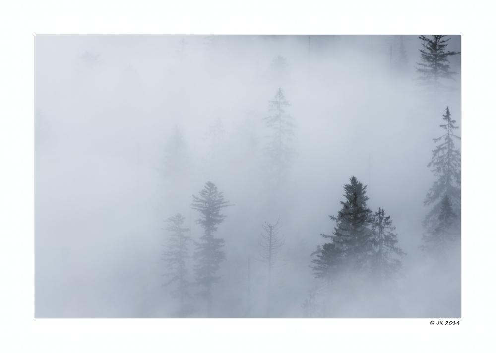 Der Nebel im Wald