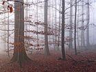 Der Nebel ist.....