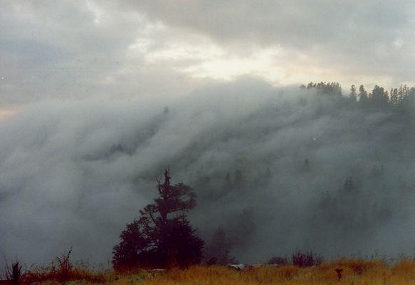 Der Nebel kriecht den Berg hoch