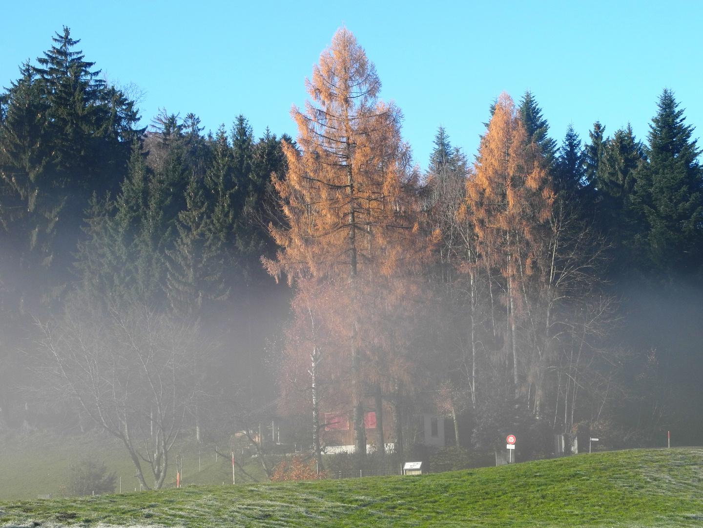 der Nebel macht der Sonne Platz