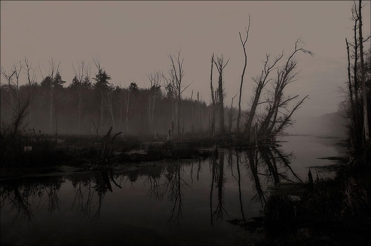 ...der Nebel zieht auf.....