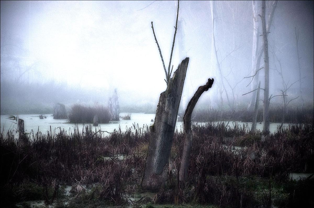 ...der Nebel zieht auf....2