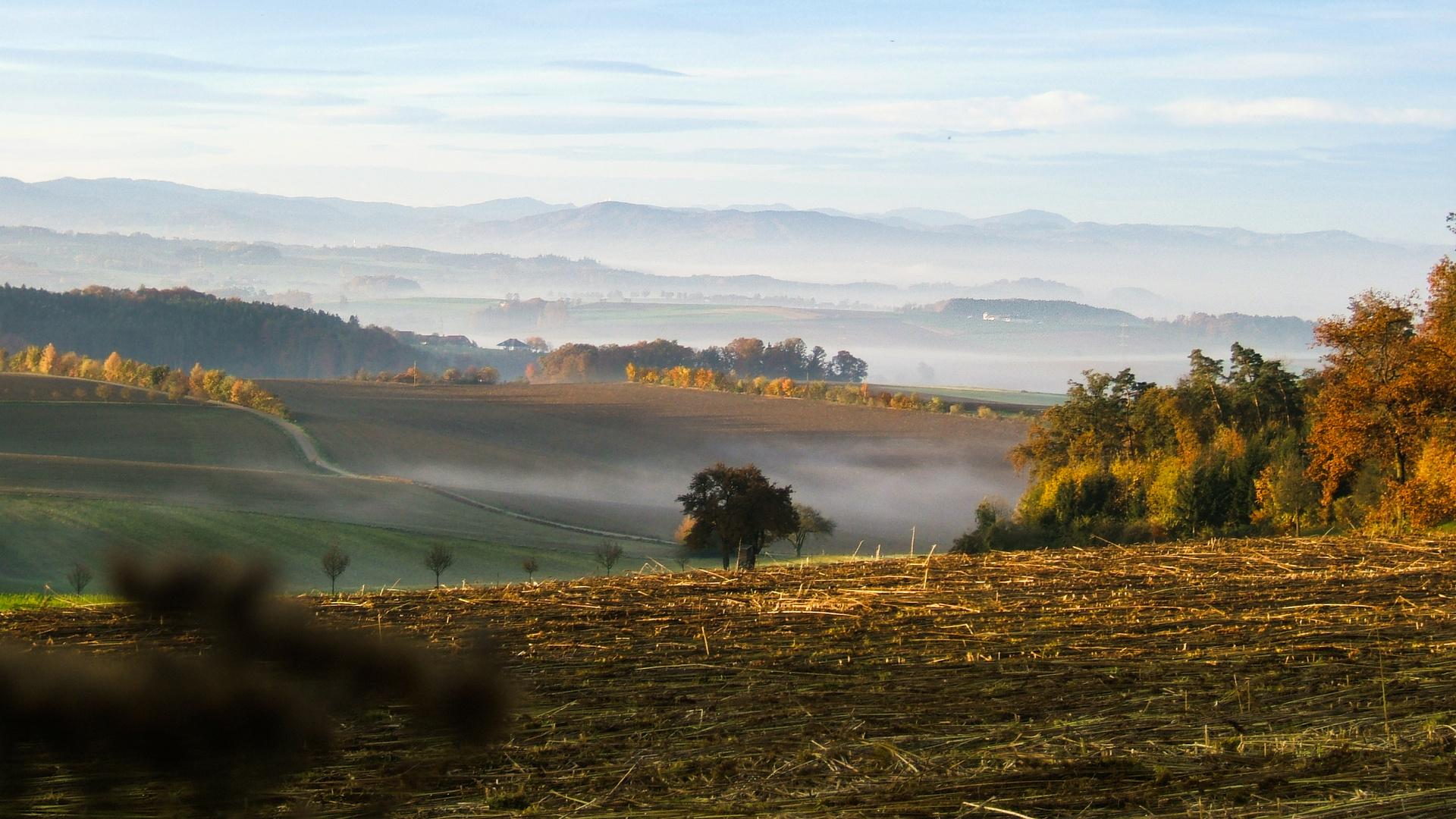 der Nebel zieht ins Land