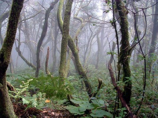 Der Nebelwald...