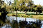 der Neckar als Spiegel