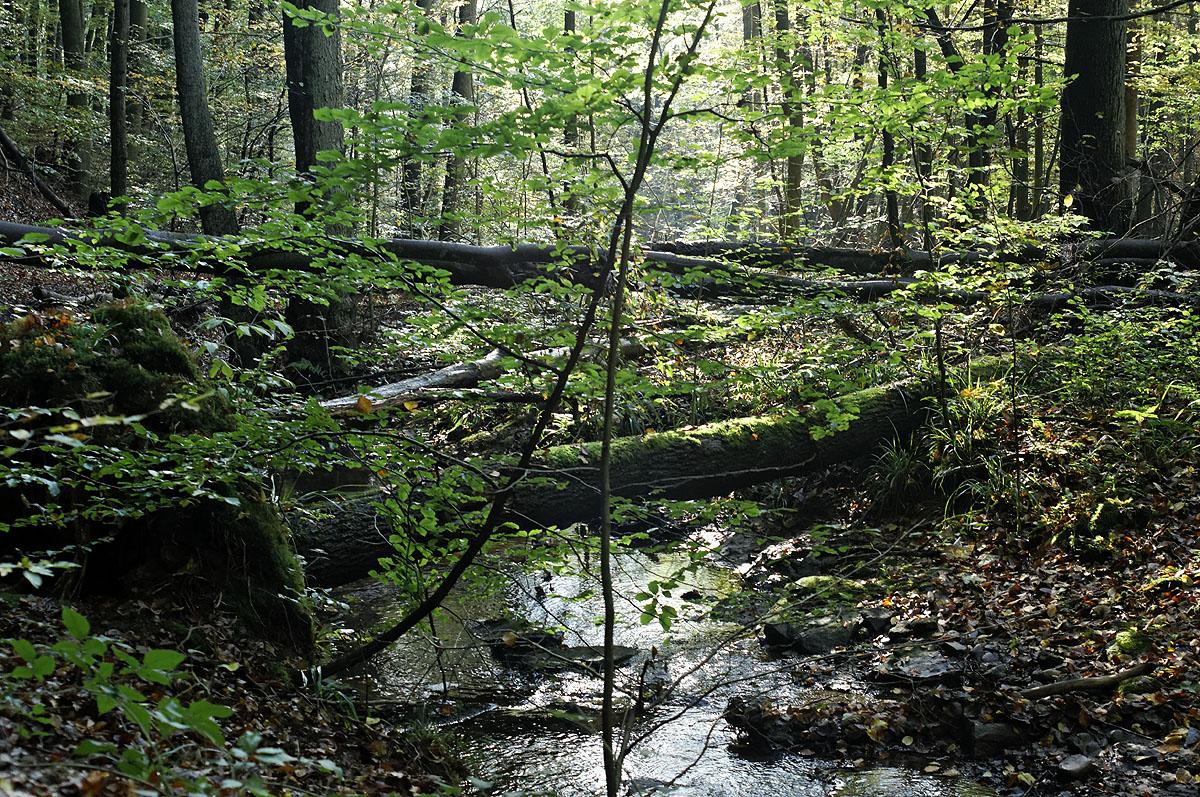 Der Netzbach mäandert durch den Saarbrücker Urwald
