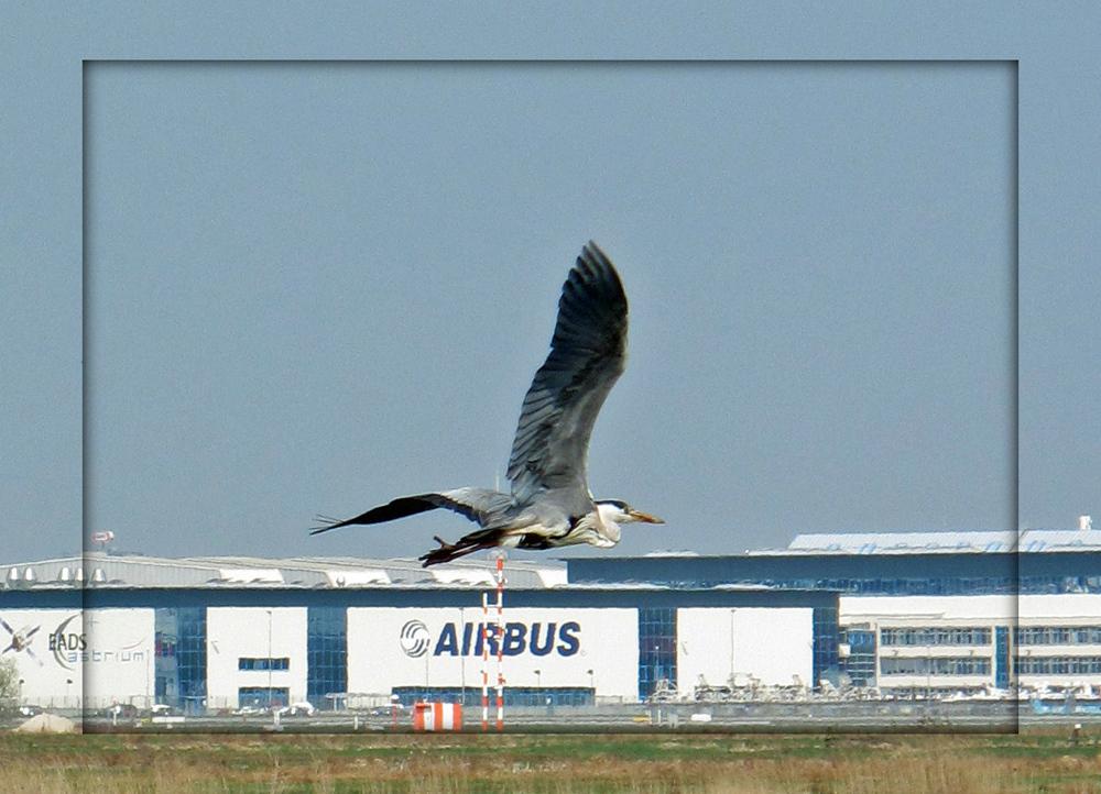 Der neueste Airbus