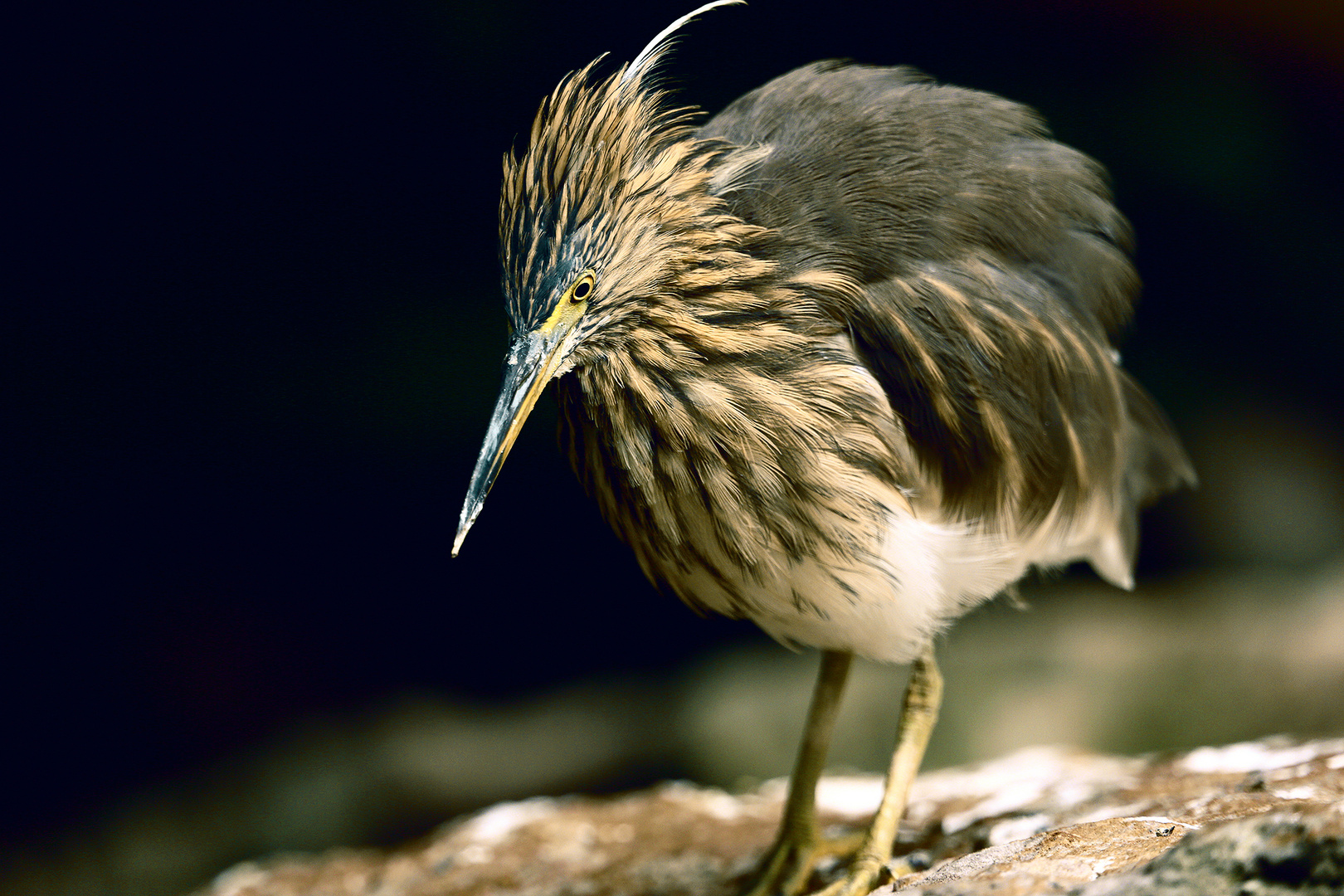 Der neugierige Vogel