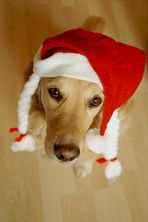Der Nikolaus im Hundepelz...