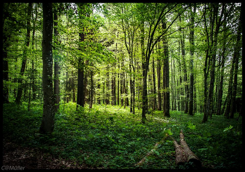 Der noch junge Wald