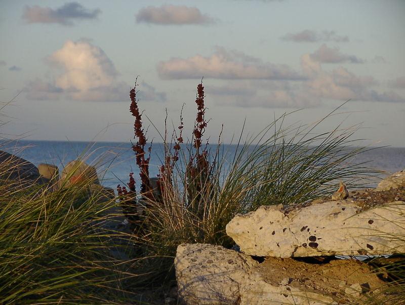Der Nordsee trotzend