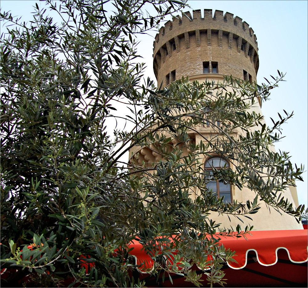 der Ölbaum und die Zichorienmühle