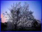 Der Orakelbaum