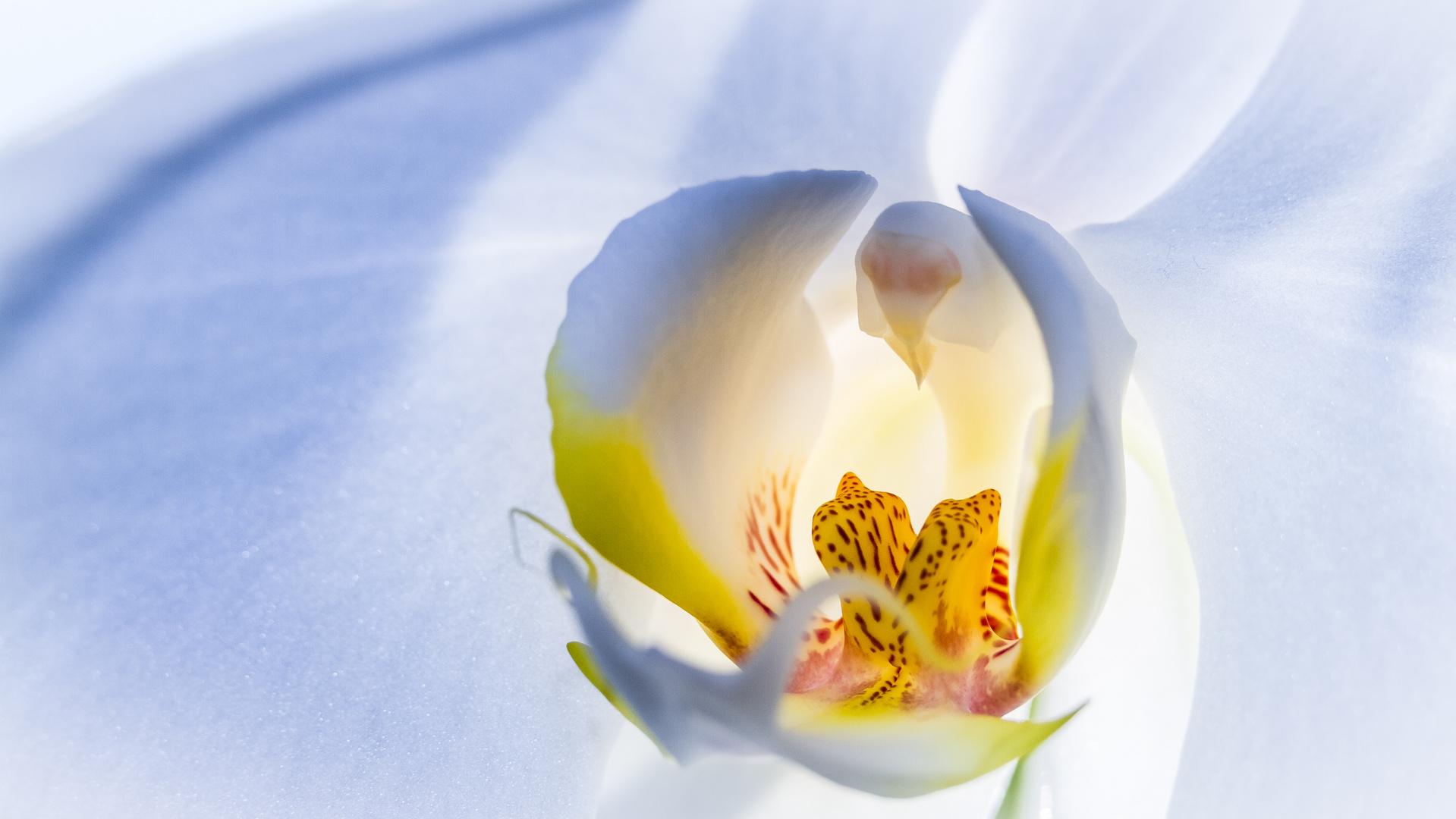 """Der Orchidee """"auf die Pelle gerückt"""""""