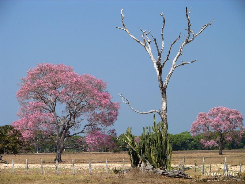 Der Pantanal in der Trockenzeit...