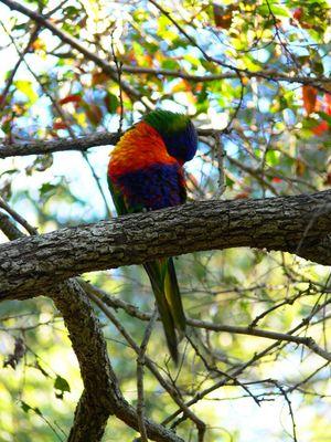 der Papagei macht eine Pause