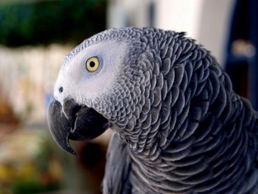 der Papagei von Loutro
