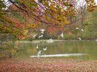 Der Park im Schloß Nymphenburg im Herbst