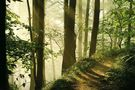 der pfad von gewald mueller