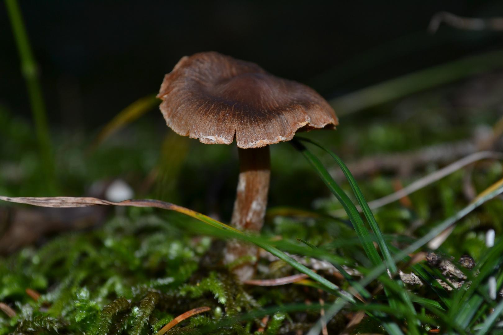 Der Pilz