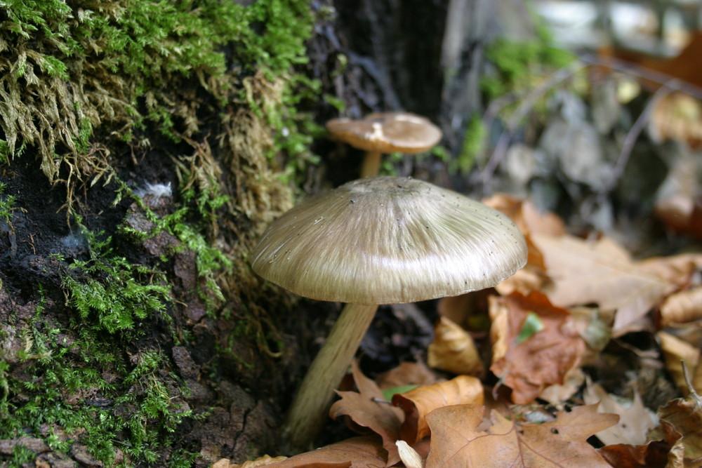 Der Pilz am Wegesrand.........
