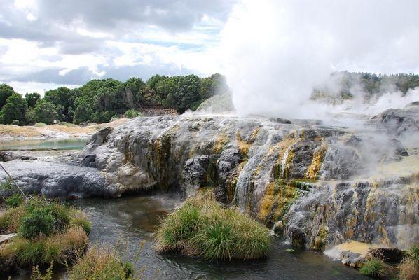 Der Pohutu Geysir in Rotorua - Neuseeland