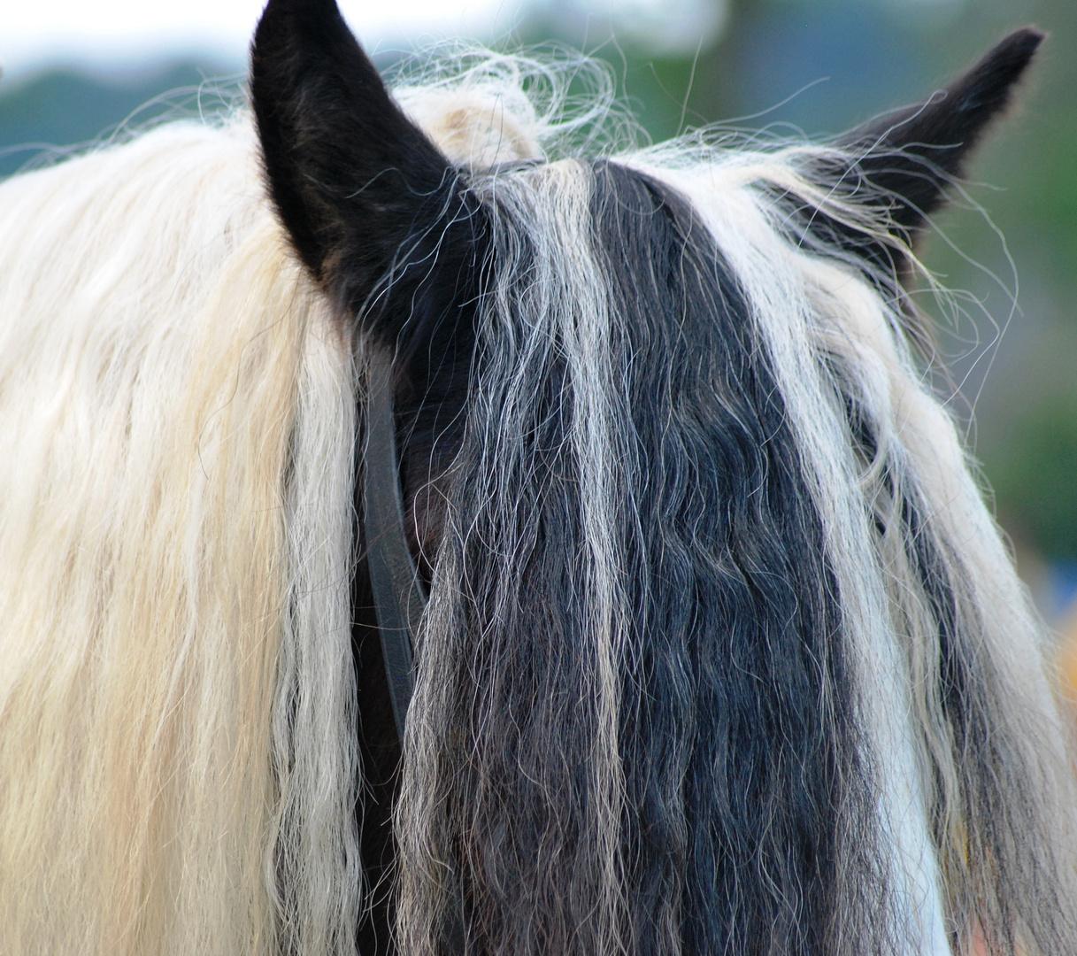 Der Pony müsste mal geschnitten werden ...