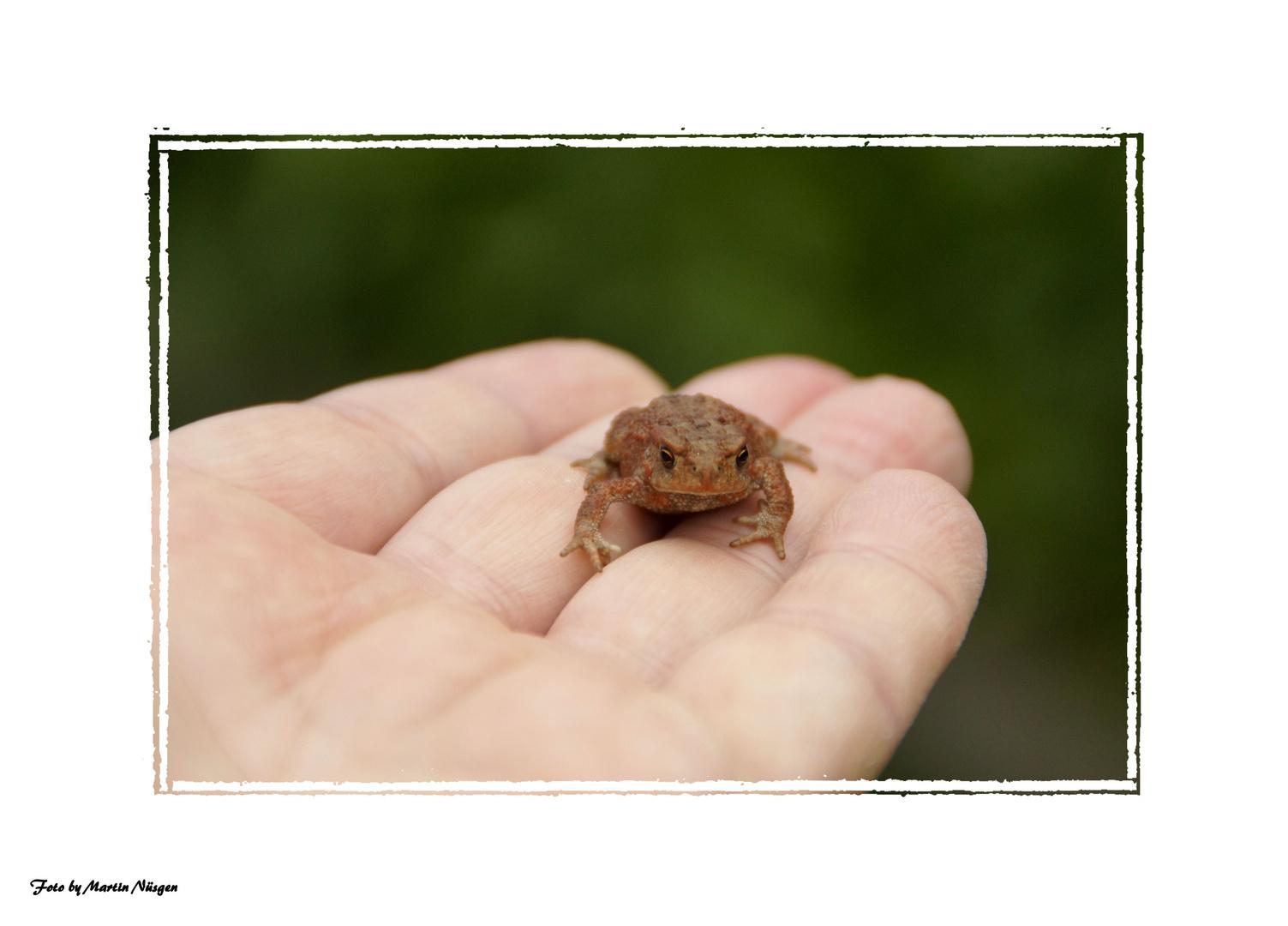 Der Prinz im Frosch